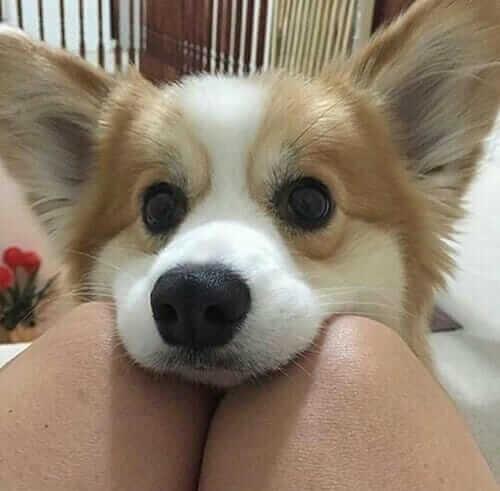 masum yavru köpek resmi