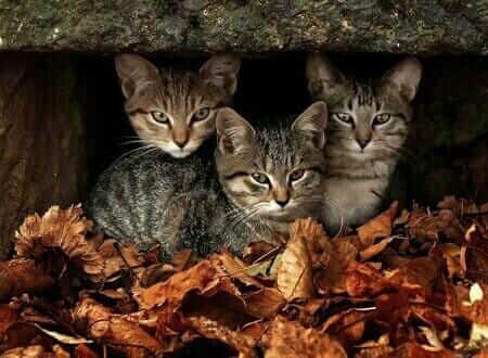 minik 3 sevimli kedi yavrusu